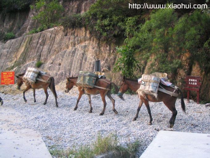 南山山顶: 修山道,一砖一瓦,都得靠牲畜驼着上山