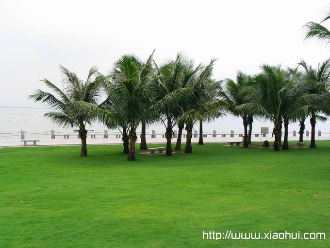 深圳红树林: 雨中红树林