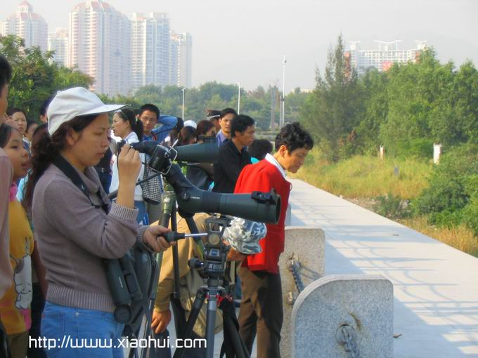 红树林: 观鸟的人们