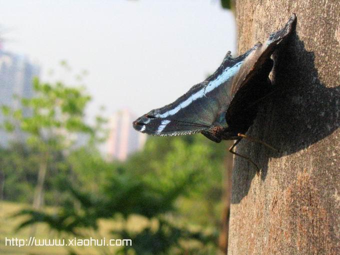 红树林: 林中树干上的蝴蝶